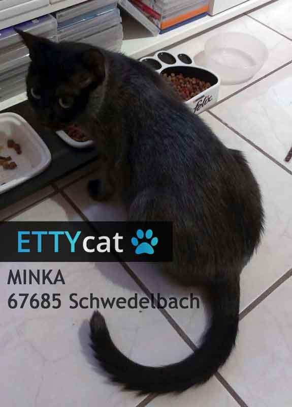 schwedelbach die katze minka wird vermisst ettycat vermisste tiere gesucht gefunden. Black Bedroom Furniture Sets. Home Design Ideas